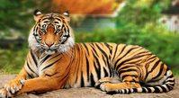 Click image for larger version - Name: tiger-dreams.jpg, Views: 2, Size: 58.88 KB