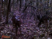 Click image for larger version - Name: wow new Bucks. nov 19 20th 025.JPG, Views: 8, Size: 616.99 KB