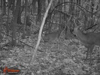 Click image for larger version - Name: wow new Bucks. nov 19 20th 030.JPG, Views: 7, Size: 490.19 KB
