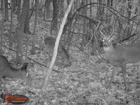Click image for larger version - Name: wow new Bucks. nov 19 20th 031.JPG, Views: 5, Size: 481.24 KB