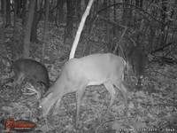 Click image for larger version - Name: wow new Bucks. nov 19 20th 039.JPG, Views: 4, Size: 451.87 KB