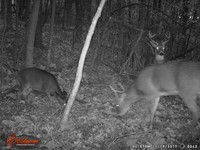 Click image for larger version - Name: wow new Bucks. nov 19 20th 041.JPG, Views: 5, Size: 448.26 KB