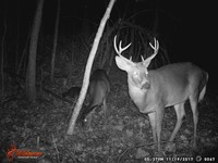 Click image for larger version - Name: wow new Bucks. nov 19 20th 066.JPG, Views: 4, Size: 337.67 KB