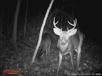 Click image for larger version - Name: wow new Bucks. nov 19 20th 067.JPG, Views: 5, Size: 328.97 KB