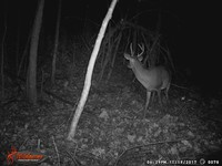 Click image for larger version - Name: wow new Bucks. nov 19 20th 077.JPG, Views: 4, Size: 327.58 KB