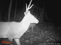 Click image for larger version - Name: wow new Bucks. nov 19 20th 078.JPG, Views: 3, Size: 298.77 KB