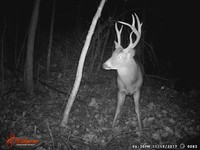 Click image for larger version - Name: wow new Bucks. nov 19 20th 082.JPG, Views: 5, Size: 328.56 KB
