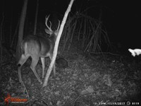Click image for larger version - Name: wow new Bucks. nov 19 20th 118.JPG, Views: 3, Size: 329.52 KB