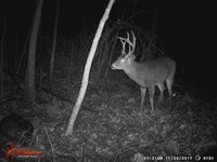 Click image for larger version - Name: wow new Bucks. nov 19 20th 150.JPG, Views: 2, Size: 326.38 KB