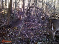 Click image for larger version - Name: wow new Bucks. nov 19 20th 190.JPG, Views: 4, Size: 623.09 KB