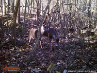 Click image for larger version - Name: wow new Bucks. nov 19 20th 199.JPG, Views: 4, Size: 651.07 KB