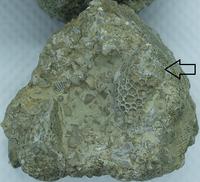 Click image for larger version - Name: sponge2.png, Views: 26, Size: 550.48 KB