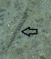 Click image for larger version - Name: Tentaculites.png, Views: 35, Size: 143.72 KB
