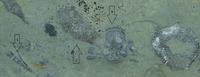 Click image for larger version - Name: trilobite.png, Views: 36, Size: 479.85 KB