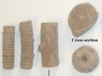 Click image for larger version - Name: Portion of My Mid-Cambrian Crinoid Collection.png, Views: 16, Size: 433.45 KB