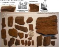 Click image for larger version - Name: Pennsylvanian Bark.png, Views: 20, Size: 1.99 MB