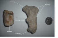 Click image for larger version - Name: Marine Fossils In Backyard.jpg, Views: 54, Size: 180.31 KB