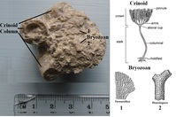 Click image for larger version - Name: UK Fossils.jpg, Views: 24, Size: 226.72 KB