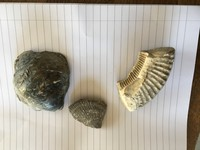 Click image for larger version - Name: Fossils 1,2,3.jpg, Views: 45, Size: 264.79 KB