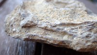 unknown UK Wenlock series fossil 13c.jpg