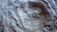 unknown UK Wenlock series fossil 14b.jpg