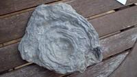 unknown UK Wenlock series fossil 14i.jpg