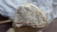 unknown UK Wenlock series fossil 15g.jpg
