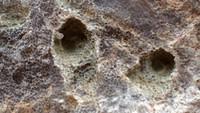 unknown UK Wenlock series fossil 16f.jpg