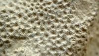 unknown coral 1h.jpg