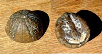 Click image for larger version - Name: Fossil 1.jpg, Views: 40, Size: 688.71 KB