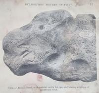 Palaeolithic Flint.jpg