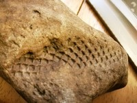Click image for larger version - Name: Fossil 1.jpg, Views: 33, Size: 213.45 KB
