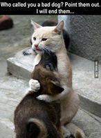 9a0c2f9efd11cb90e875b567b33a1bd9--cats-humor-funny-cats.jpg
