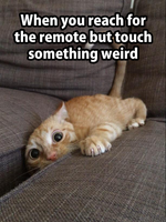 when-you-reach-for-the-remote-but-touch-something-weird-cat-in-between.png