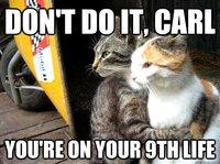 funny-cats-hugging-memes.jpg