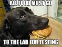 Dog-Memes-Funny-03.jpg